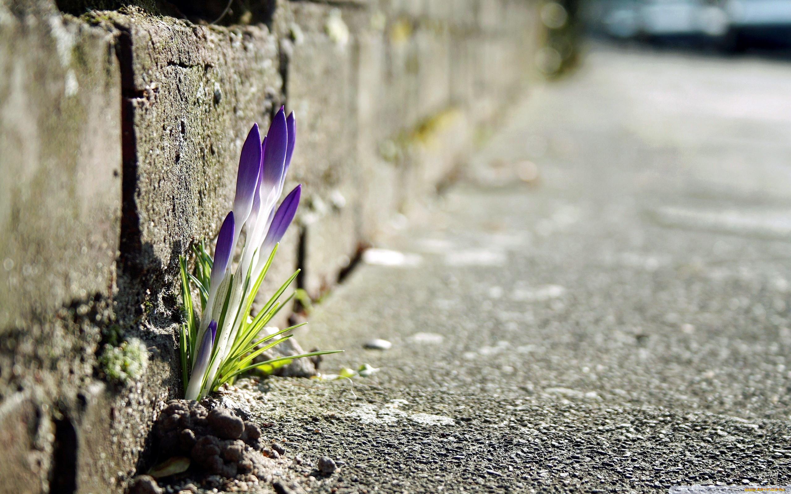 связи красивые картинки цветок из асфальта способны создавать электрические